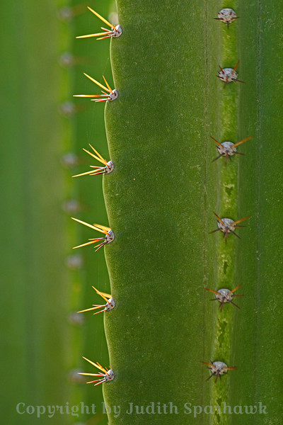 On the Edge ~ A view of a large cactus plant photographed in Desert Hot Springs, California.