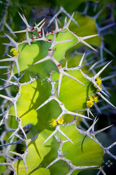 Cactus Extreme