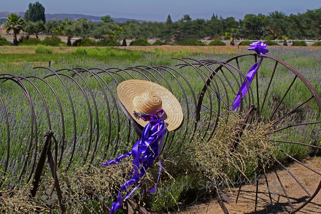 Lavender Festival ~ Out in the lavender fields there were several old pieces of farm machinery, all decorated for the occasion.