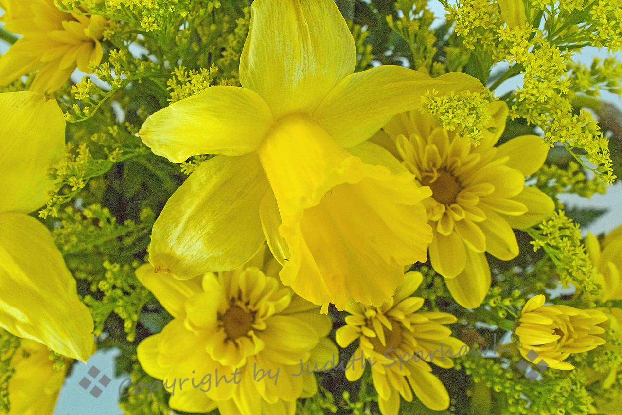 Daffodilly ~