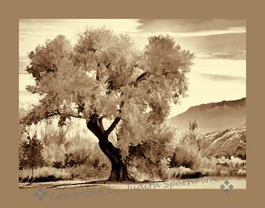 The Big Tree II