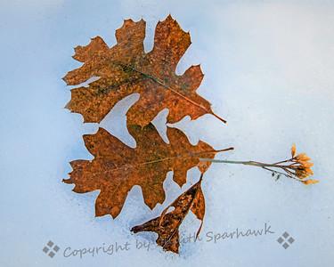 Mother Nature's Still Life - Judith Sparhawk