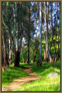 Trail Into the Eucalyptus Grove
