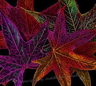 Dazzle Me with Color - Judith Sprhawk