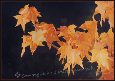 Autumn Gold - Judith Sparhawk