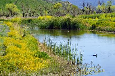 Springtime at the Ponds - Judith Sparhawk