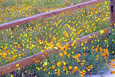 Field of Flowers - Judith Sparhawk