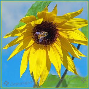 Sunshine & Bee - Judith Sparhawk