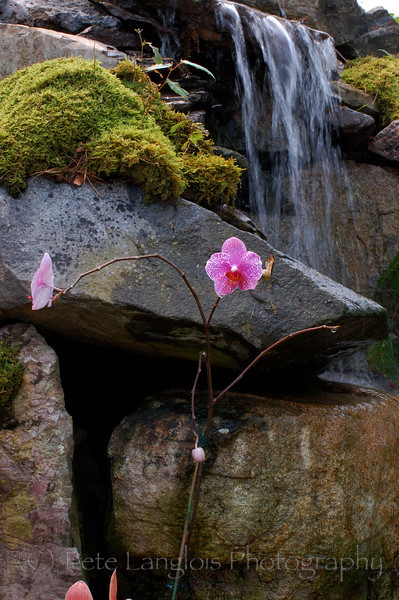 Orchid with butterfly in background on waterfall.