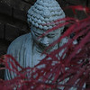 Buddha with Japanese Maple