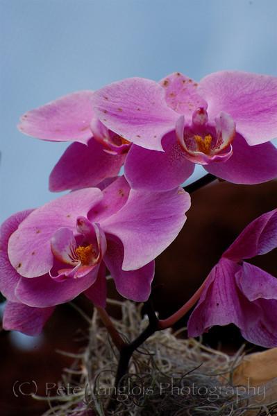 Orchid cool looking petals.