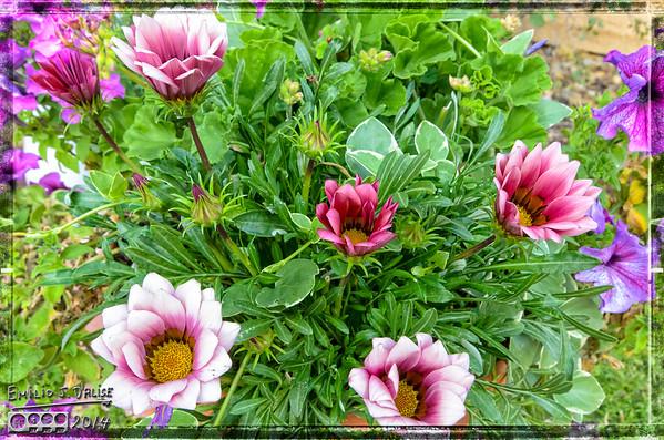 Flowers - September 2014