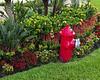 Boardwalk Fireplug and Blossoms
