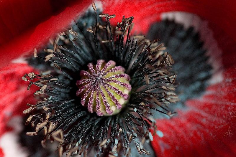 Unknown flower center...