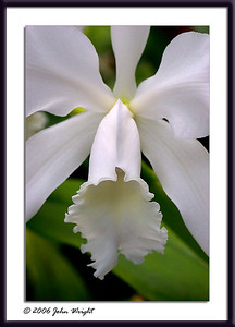 White Orchid with a frame treatment...