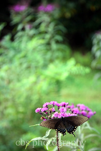butterfly on purple flower