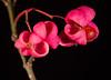 Unidentified flowers #1