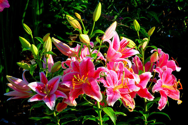 Flowers and ornamental plants