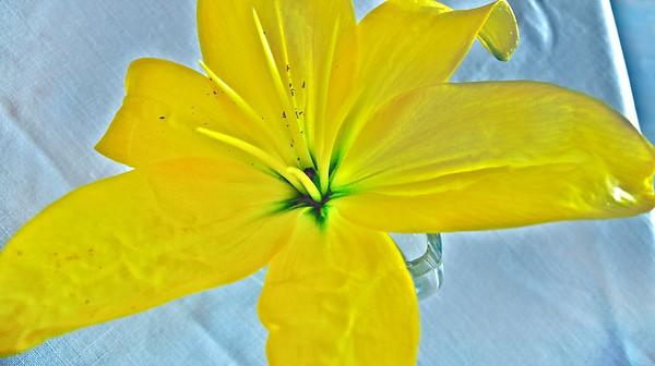 spring flowers 2008 5
