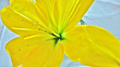 spring flowers 2008 7