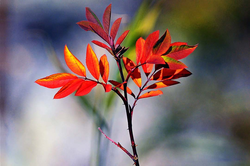 Autumns Farewell.