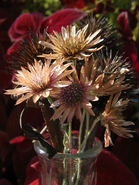 Some dried flowers I stuck in a vase and sat outside.<br /> I thought they looked really nice for late summer.