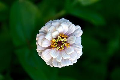 Flowers by Kim