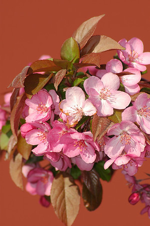 Flowers close ups