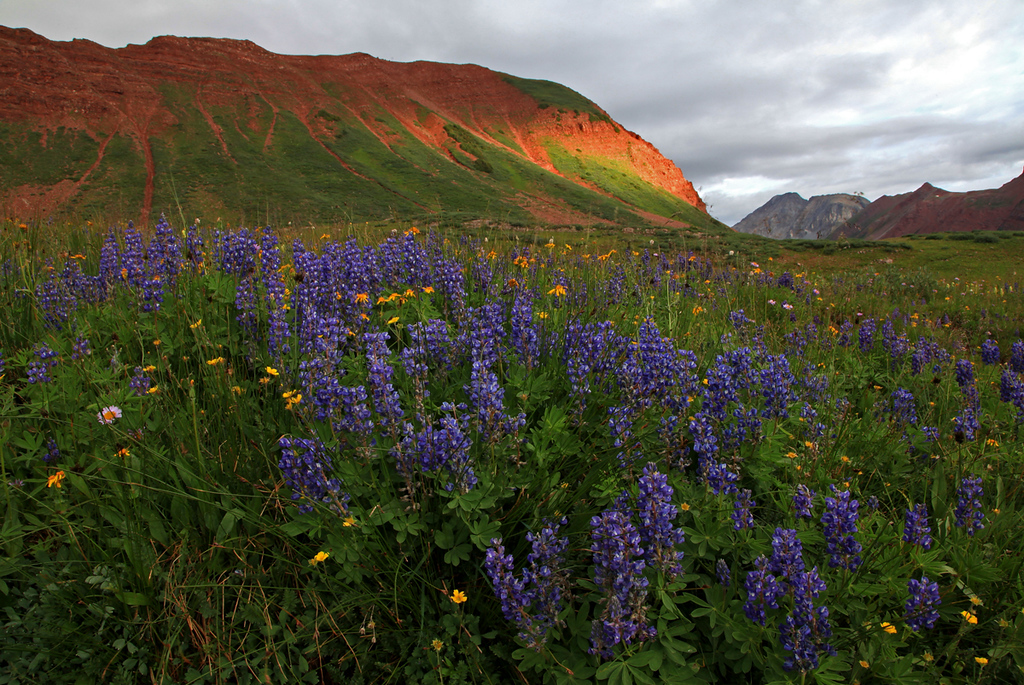 Sunrise in Fravert Basin with lupines