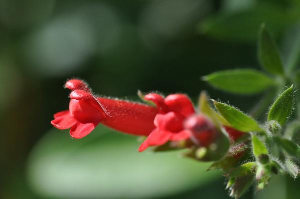 flowers in yard - 06/29-10