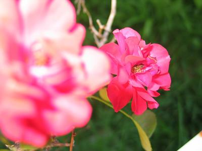 flowers july 2003
