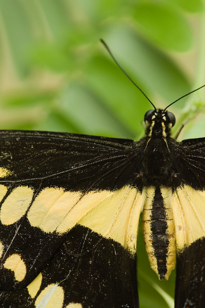 Butterfly, very close