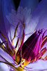 Flower pictured :: Waterlily<br /> <br /> Flower provided by :: Enery Water Gardens<br /> <br /> 071113_013276 ICC sRGB 16x24 pic