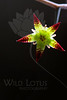 Flower pictured ::<br /> <br /> Flower provided by :: Tagawa Gardens<br /> <br /> 031713_009198 ICC sRGB 16x24 pic