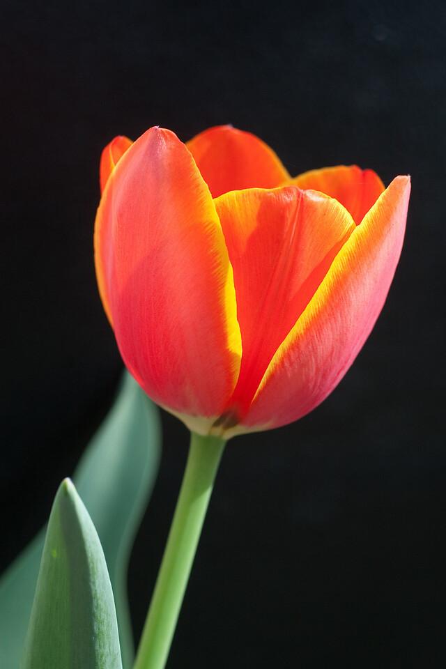 Flowers on Black (1 of 7)