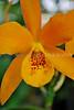 Orange (NYBG- Fri 3 6 09)