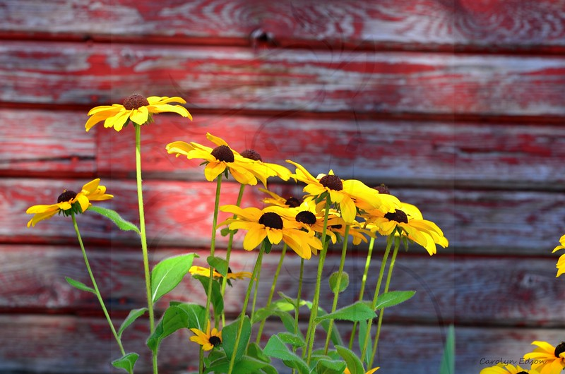 Flowers ~ wild and domestic