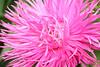 flower2666