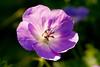 flowers_QBC_210908_0002 copy