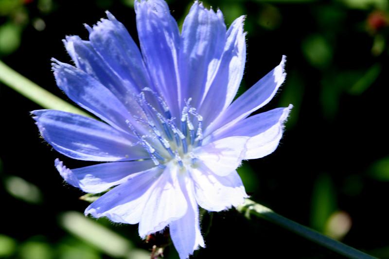 flower-230907_3447