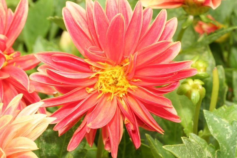 flower2671