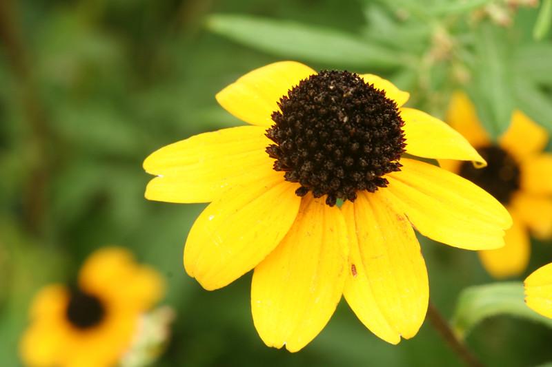 flower-220907_3377