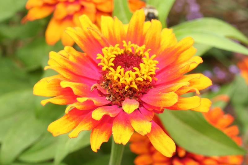 flower2693