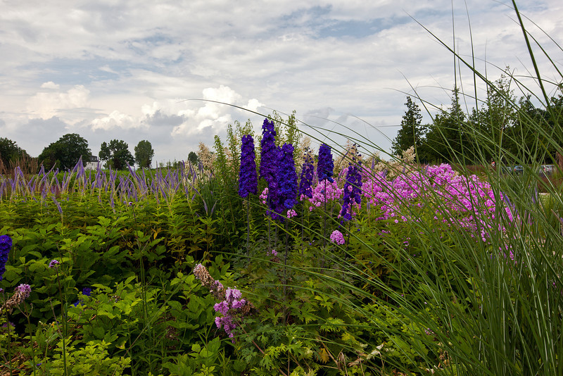 Ehrenbrenstein Fortress Flowers 2, Germany.