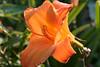 Flowers_MG_4428 copy