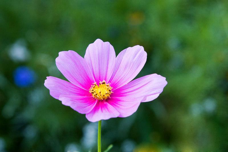 Flowers_MG_4431 copy