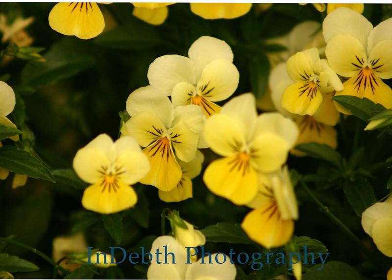 7350 - Atlanta Flowers