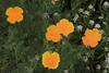 Flowers_MG_4180