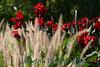 4109 - Flowers-Grass