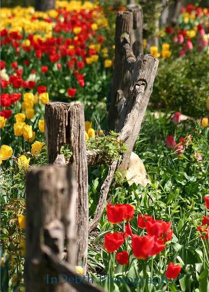 1599 Flowers 5X7